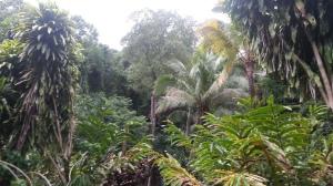 Jungle Paraty