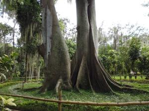 San Gil Tree 2