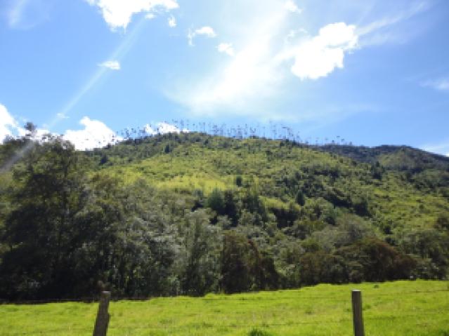 Valle del Cocora 2