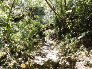 Valle del Cocora 3