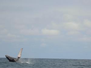 Wale 2