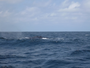 Wale 1