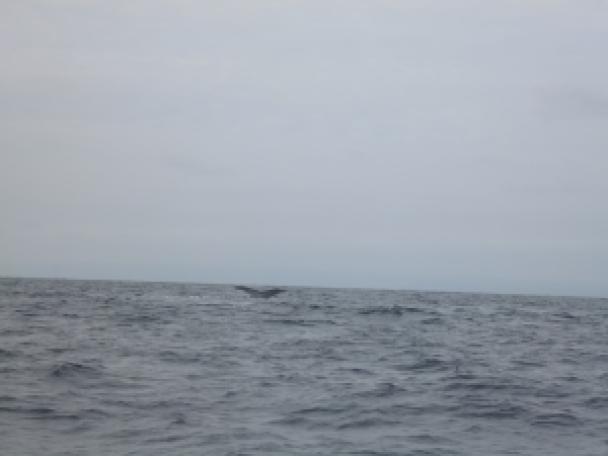 Wale 3