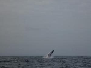 Wale 4