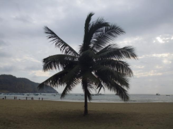 Palm x